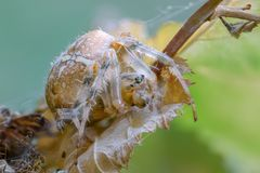A spider on the leaf of a plant royalty free stock images