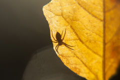 Spider on a leaf Stock Images