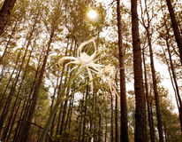 Spider Lily in Pine Forest. With the sun peeking through the canopy in background royalty free stock photos