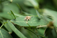 Spider. A little spider on the leaf Royalty Free Stock Photos