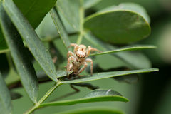 Spider. A little Spider on the leaf Stock Images