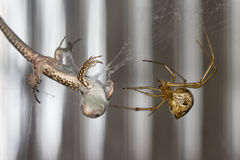 Spider and lizard Royalty Free Stock Images