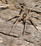 Spider on log royalty free stock images