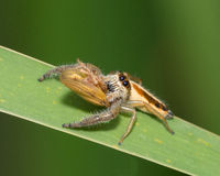 Spider - Lunchtime Stock Photography