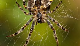 Spider Macro Stock Photo