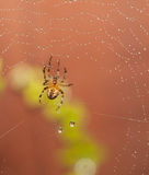 Spider macro Stock Images