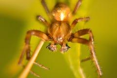 Spider macro crawling web crawling Royalty Free Stock Photography