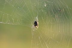 Spider macro. Cross Orbweaver Araneus diadematus on the its web with sun rays royalty free stock photos
