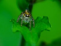 Spider macro Stock Photography