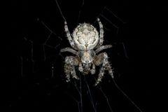 Spider. Macro Stock Photo