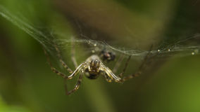 Spider macro. Macro photo of a spider hanging on a spiderweb upside down Royalty Free Stock Photos