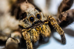 Spider. Macro photography LOVEPHOTOGRAPHY man women the photographie picturs photo Stock Image