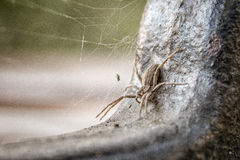 Spider macro Royalty Free Stock Image
