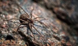 Spider Macro1 Royalty Free Stock Photos