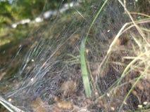 Tangled fly trap stock photos