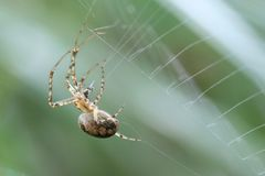 Spider making its web Stock Images