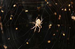 Spider web by night Stock Image