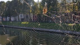 Spider making web next to river Royalty Free Stock Images