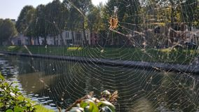 Spider making web next to river Royalty Free Stock Photography