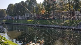 Spider making web next to river Royalty Free Stock Photos