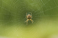 Spider making a web Royalty Free Stock Photos