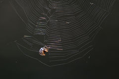 Spider making a web Stock Photography