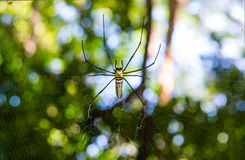 Spider. Man is a creature that arthropods . R. Thomas or iPod Like insects , millipedes , crabs etc have various different shapes and sizes out Royalty Free Stock Photos