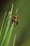 Spider on meadow Stock Photos
