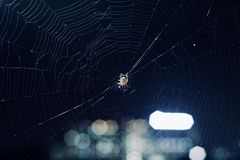A spider within a medium spiderweb background photo. A beautiful spider inside a spiderweb with illuminated blurred lights unique royalty free images royalty free stock image