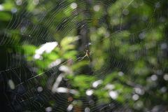 Spider in the middle of its web Stock Photography