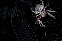 Spider in the middle of a web. Close up of a large spider in the middle of its web Royalty Free Stock Photography