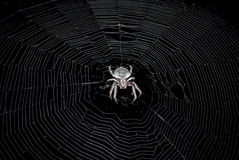 Spider in the middle of a web. A large spider in the middle of its web ready to hunt for the night Stock Photography