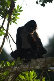 Spider monkey contemplating. Spider Monkey in Tikal National Park, Guatemala, Central America Stock Photo