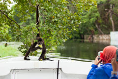 Spider Monkey Posing for Tourists Royalty Free Stock Photos