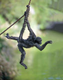 Spider monkey on a rope Royalty Free Stock Photography