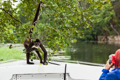 Spider Monkey with Tourist Royalty Free Stock Photo