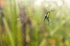 Spider in morning meadow Stock Photo