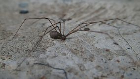 Spider moving a little stock video footage