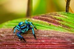 Spider. Multi Coloured Spider Stock Images