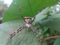 The spider royalty free stock photography
