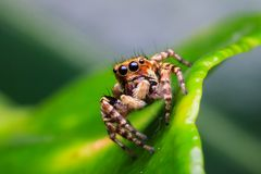 Spider in nature stock photography