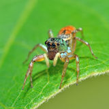 Spider in nature Stock Photos