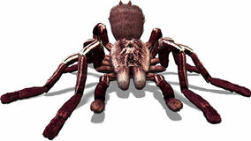 Spider near by. A spider very close to you Stock Images