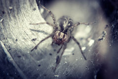 Spider in the nest Stock Images