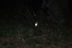 Spider. Nest waiting insects and fly stock photo