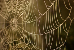 Spider net Royalty Free Stock Photos