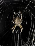 Spider in net Stock Photos