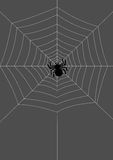 Spider on the net Royalty Free Stock Image