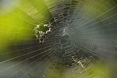 Spider Net Royalty Free Stock Images