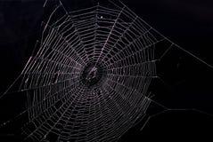 Free Spider Net Royalty Free Stock Photos - 17084618